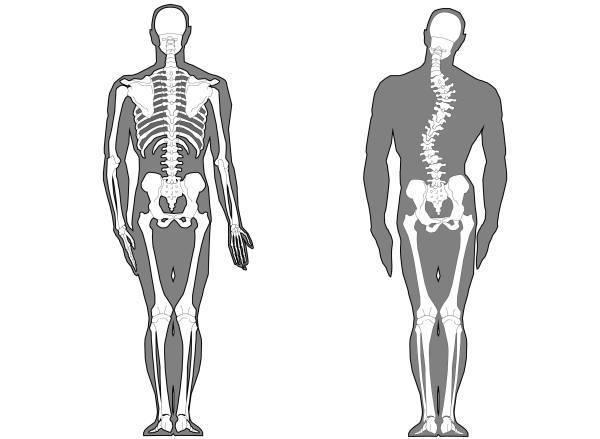 ch1-263jpg。 背骨が痛いと悩んでいるあなた。 背中がコルと悩んでいませんか?背中の痛み/凝りの多くは治すことができます。 背中のコリの発症する原因の大多数は骨格の歪みが原因です。 浜松市南区でカイロプラクティック、整体をお探しでしたら、口コミで評判の整体/カイロプラクティックをおススメします。 背中の痛み/コリは、早いうちに改善することが大切です。 背骨のズレは、そのままにしておくと悪くなっていきます。 背中の痛み/コリには、突然出現する痛みや凝りから慢性的に症状が継続するものまで多種多様です。 背中の痛みの多くが、筋肉骨格系のものです。 当院は、浜松市南区の筋肉骨格系の治療の専門院です。 脊椎、骨盤矯正のことならお任せ下さい。 口コミで評判の整体、カイロプラクティックです。